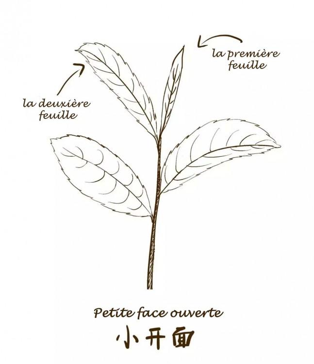 Cueillette1